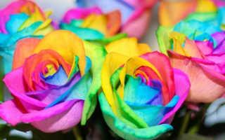 Как сделать радужные розы с цветными лепестками