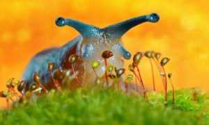 Как бороться со слизнями в саду и на огороде народными средствами