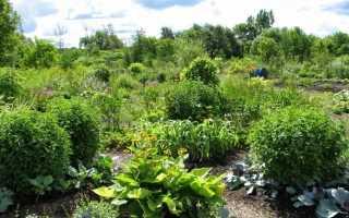 Пермакультура — биологическое земледелие в замкнутой системе
