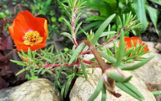 7 способов быстрого озеленения участка