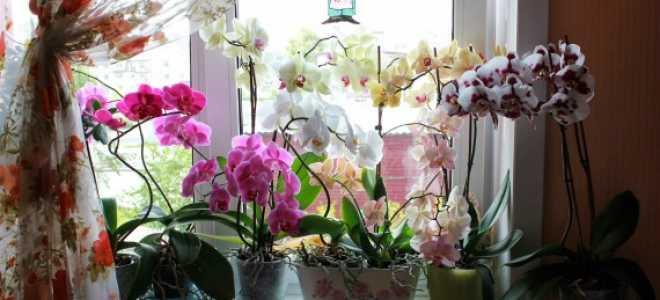 Как правильно пересадить орхидею в большой горшок