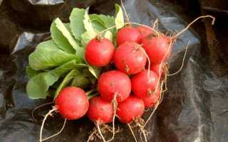 Редис — особенности выращивания, популярные сорта
