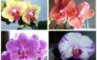 Почему желтеют листья у орхидеи: причины и решение проблемы