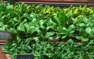 Выращивание зелени в теплице на продажу — удачный бизнес