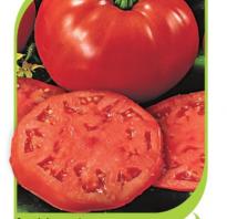 Характеристика помидоров сорта Биг Биф