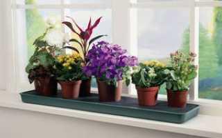 Какие виды и разновидности комнатных растений украсят дома