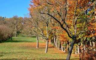 Своевременный уход за яблоней осенью и подготовка к зиме