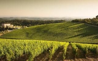 Подкормка винограда на зиму: чем удобрять растение осенью
