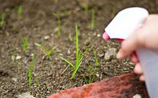 Простой способ избавиться от сорняков