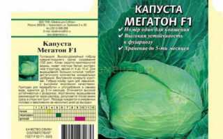Характеристика и описание капусты сорта Мегатон