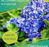 Календарь цветочных ароматов