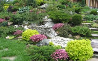 Лучшие декоративно-лиственные почвопокровники для альпийской горки