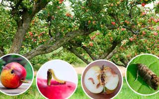 Защита яблони от бактериальной инфекции