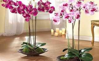 Пересадка орхидей в домашних условиях и уход за ними