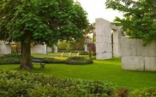 6 недооцененных функций декоративных деревьев и кустарников