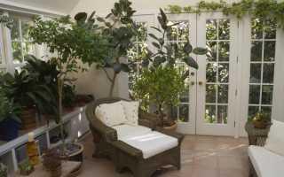 Живые комнатные деревья и выращивание декоративных растений