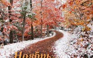 Календарь садово-огородных работ на ноябрь
