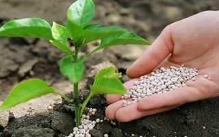 Инструкция по применению на огороде удобрения нитроаммофоска