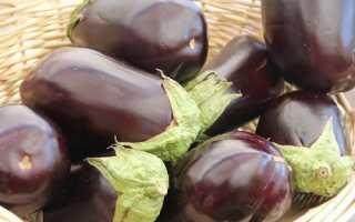 Лучшие новые сорта и гибриды баклажанов для теплицы и открытого грунта