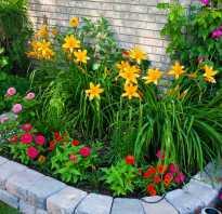Какие растения во дворе дома можно использовать для посадки