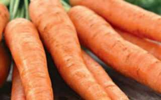 Характеристика моркови сорта Королева осени