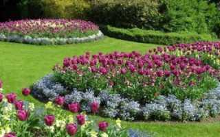 Ранние многолетние луковичные цветы — украшение сада