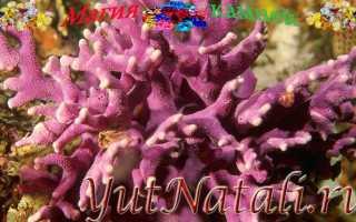 Маленький коралл дома