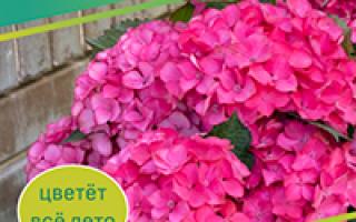 Особенности хвойных растений для сада