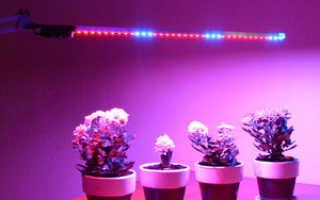 Освещение домашних цветов лампой дневного света