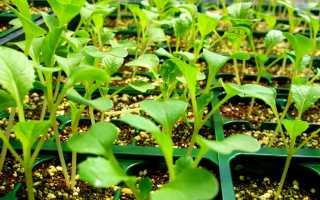 Что такое черенок и особенности черенкования растений