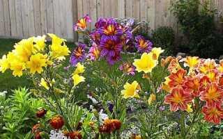 Выращивание сальпиглоссиса из семян в домашних условиях и на участке