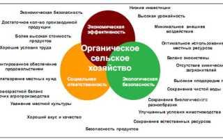 Принципы и основы органического земледелия на даче