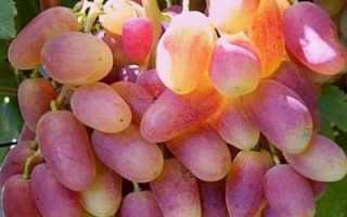 Описание и характеристика сорта винограда Преображение
