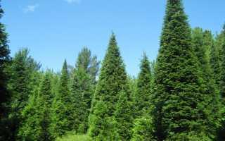 Какие бывают вечнозеленые растения