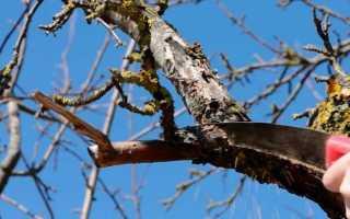Инструкция по обрезке яблони осенью для новичков
