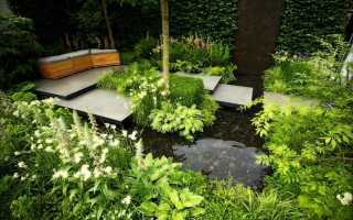 Выбор влаголюбивых растений для сада