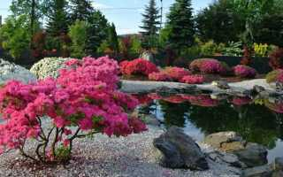 Какие бывают кустарники: разновидности и описание