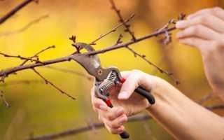 Обрезка вишни весной — как правильно сформировать крону