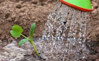 Значение и состав минеральных калийных удобрений