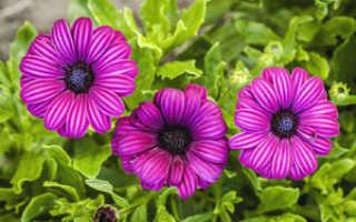 Список названий однолетних растений для сада и огорода