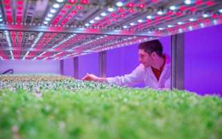 Использование светодиодных ламп для выращивания растений