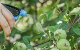 Дополнительные подкормки садово-ягодных культур
