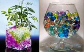 Использование шариков гидрогеля для комнатных растений