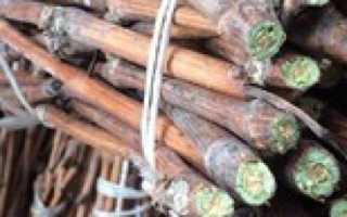 Уроки садоводства: способы хранения черенков винограда зимой