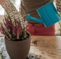 Как удобрять растения – комнатные и садовые