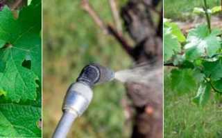 Особенности обработки винограда осенью перед укрытием на зиму