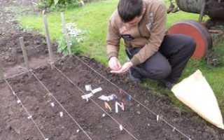 Где взять материал для выращивания подвоя яблони из семян