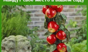Посадка и уход за колоновидными плодовыми деревьями