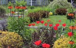 Рябчик — посадка, выращивание и уход