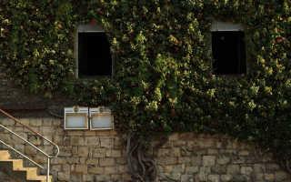 Как правильно обрезать виноград осенью: схема для начинающих